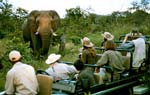 Escorted tour through the Safari